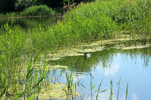 pond  scrubs  water