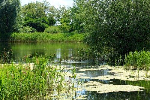 pond  scrubs  green