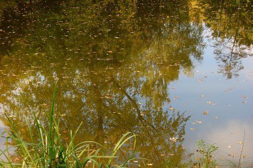 pond pools trueb