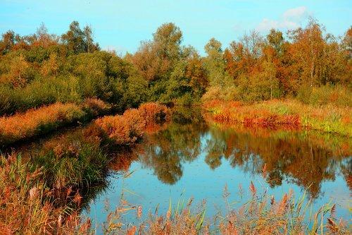 pond  banks  vegetation