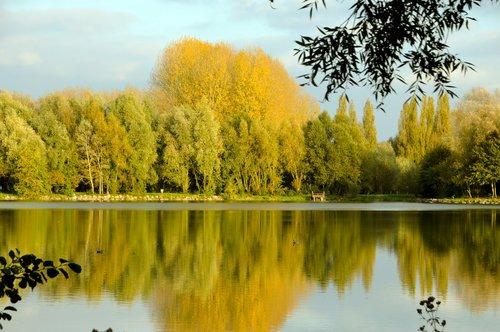 pond  lake  woody