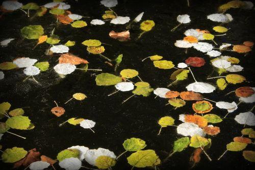 pond leaves plants