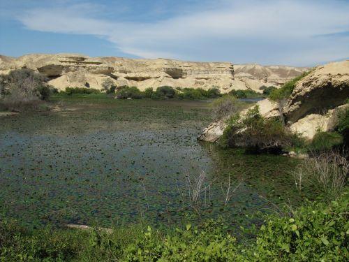 pond water desert