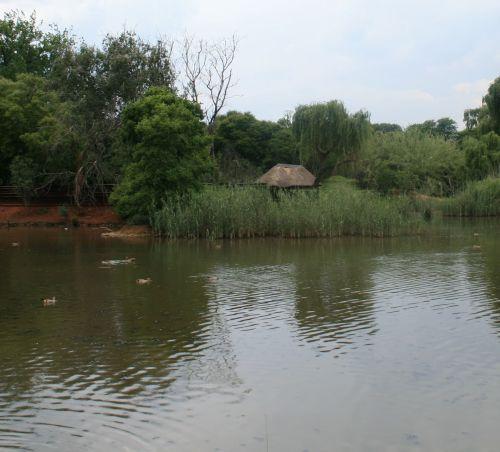 Pond At Austin Roberts Bird Park