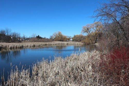 pond in spring  pond  lake scene