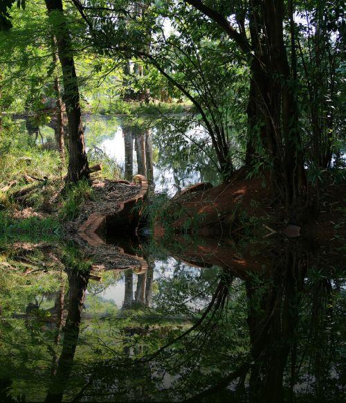 Pond Reflection, Irene Dairy Farm