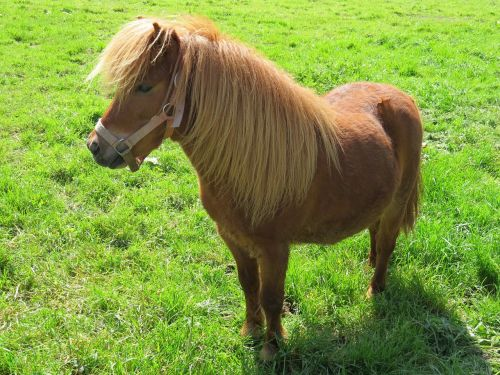 pony pets farm