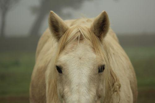 pony horse domestic