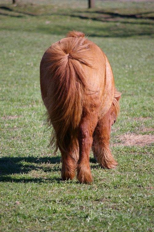 pony horse small