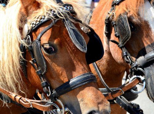 pony horse horse-drawn carriage pony