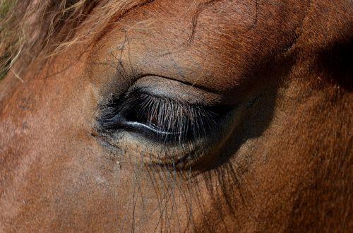 pony horse dare