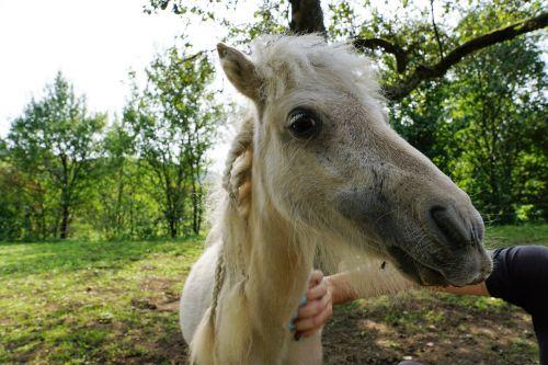 pony horses mold