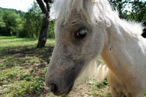 pony horse white