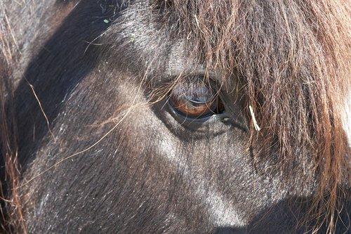 pony  horse  eye