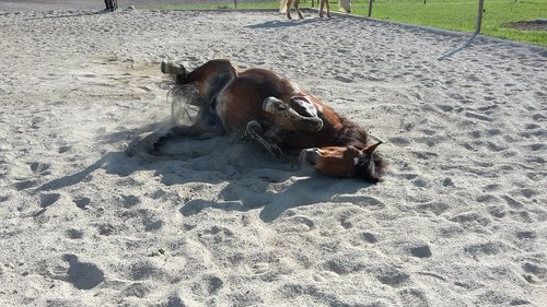 pony  clay court  rolling