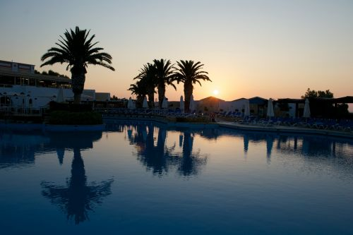 pool reflection palm tree
