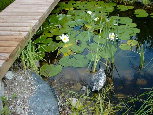 pools water lilies boardwalk