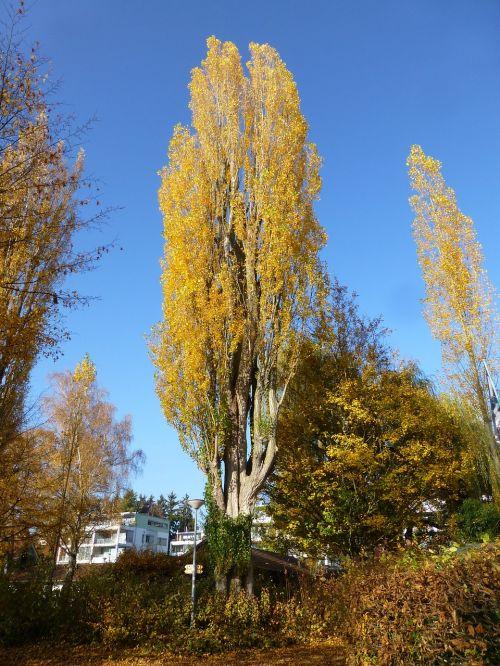 poplar autumn überlingen east bath