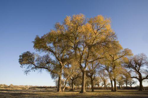 poplar west wilderness