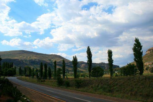 Poplars By The Roadside, Clarens