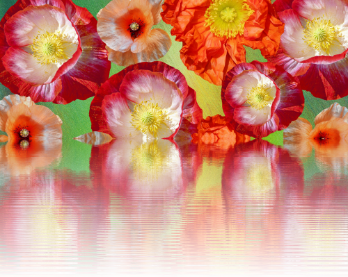 poppies effect summer
