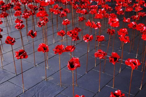 poppies war remembrance