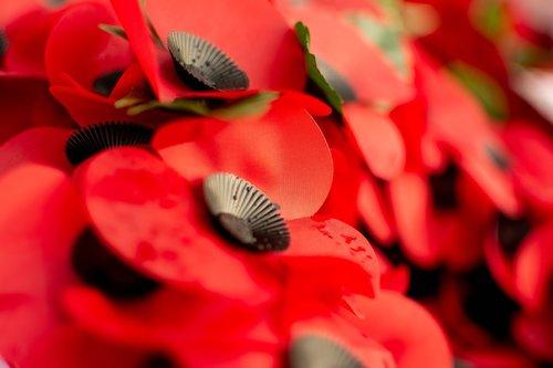 poppies  poppy  plastic poppy
