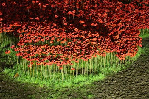 poppies rivers of blood ceramic
