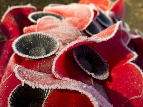 poppies remembrance wreath