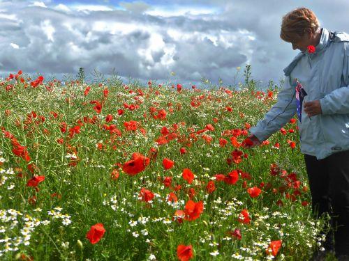 poppies field woman