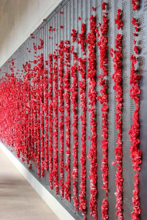 poppies memorial war