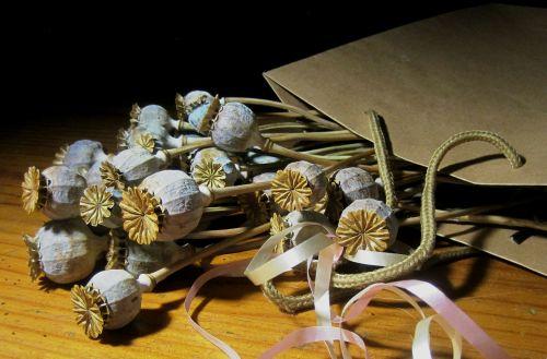 poppy seed pods dry