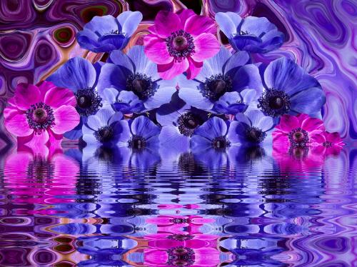 poppy blossom bloom