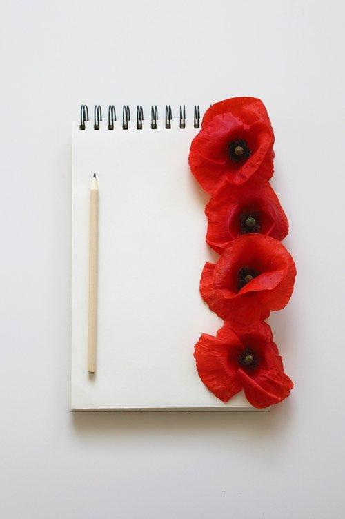 poppy  poppy flower  red