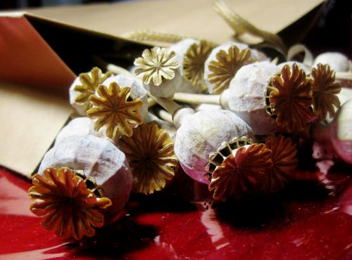 Poppy Seedpods On Red Surface