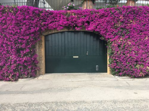 porches flowers gate