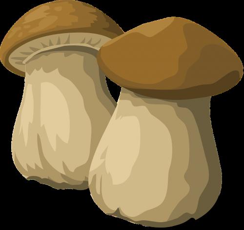 porcini mushroom fungus