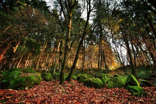portland oregon trees