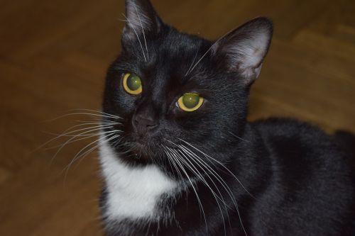 portrait cat pet