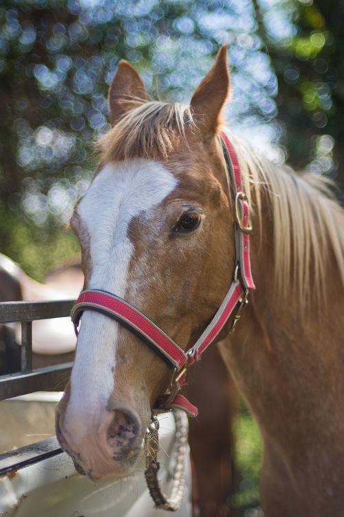 portrait horse summer