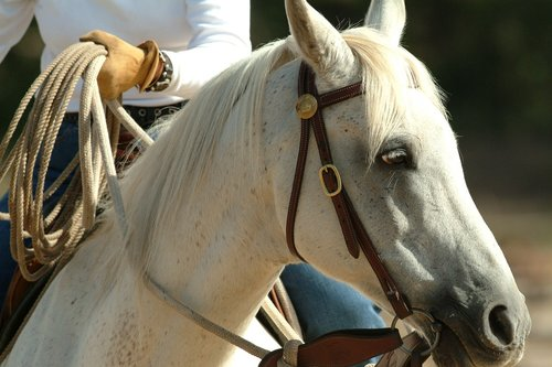 portrait  horse  equine
