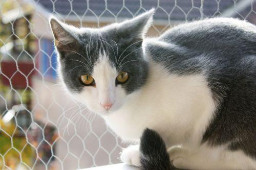 Portrait Of A Curious Cat