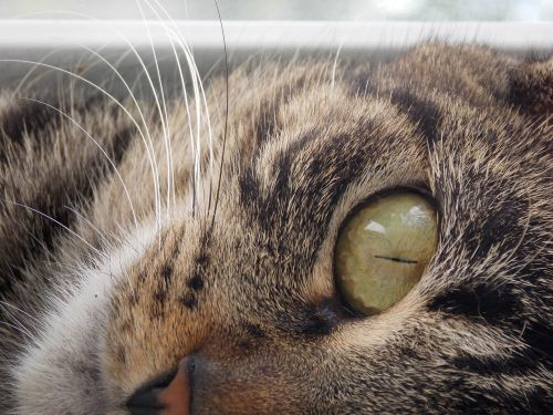 posing smart cat cat