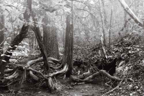 Possumhaw Trail