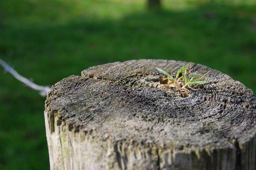 post grass landscape