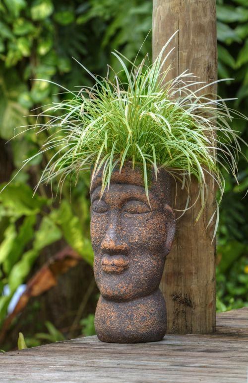 pot head polynesian plant