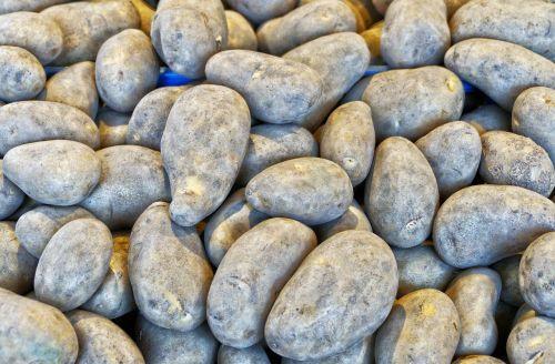 potato earth apple grumbeer