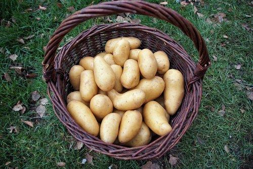 potato  basket  potatoes