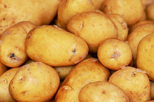 potatoes  erdfrucht  harvest
