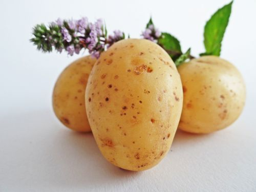 potatoes vegetables field